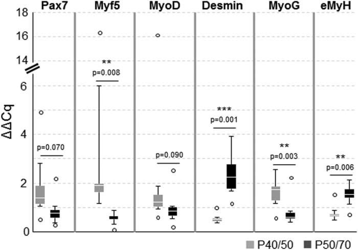 Gene expression analysis of freshly isolated P40/50 and P50/70 cells. Gene expression analysis of the myogenic marker genes Pax7, Myf5, MyoD, Desmin, MyoG , and embryonic Myosin (eMyH ) of freshly isolated cells from LD muscle (n = 6). Quantitative real-time PCR shows the higher expression of transcription factors Myf5 and MyoG in P40/50 cells. In contrast, Desmin and eMyH are significantly upregulated in P50/70 cells. ΔΔCT values of each sample are presented as Box-Whisker plots with the maximum 1.5 of the interquartile range (Q 1 –Q 3 ), and the resulting outliers are included as circles. For statistical analysis, Students t-test ( Pax7, MyoD, Desmin, MyoG, eMyH ) or Mann-Whitney Rank Sum Test ( Myf5 ) was performed, **p ≤ 0.01, ***p ≤ 0.001.