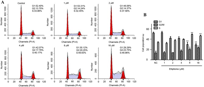 Cell cycle analysis of T-24 bladder cancer cells treated with ellipticine. (A) Cells were treated with different concentrations of ellipticine for 24 h and then stained with propidium iodide. The DNA content was analyzed by flow cytometry. G1, S and G2/M indicate the respective cell cycle phase. (B) Quantification of cell cycle analysis from three independent experiments. The data are presented as mean ± standard deviation. *P