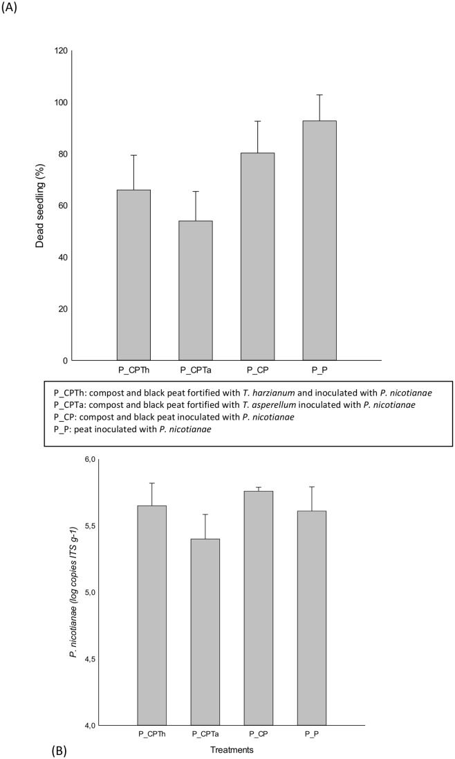 Percentage of dead seedling by P . nicotianae (A) and quantification of P . nicotianae (B) for each treatment after harvesting. (P_CPTh): compost and black peat fortified with T . harzianum ; (P_CPTa): compost and black peat fortified with T . asperellum (P_CP): compost and black peat (P_P): Peat, inoculated with P . nicotianae .