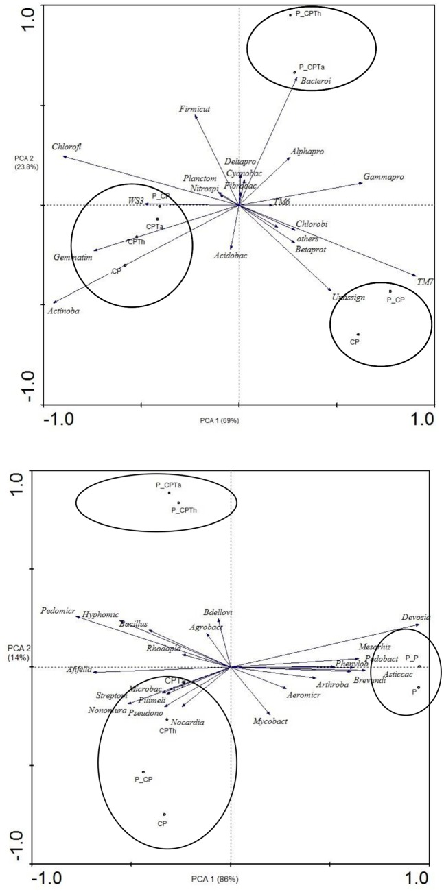 Principal components analysis of bacterial communities (phylum) (A) and genera (B) of all treatments after harvesting. (CPTh): compost and black peat fortified with T . harzianum ; (CPTa): compost and black peat fortified with T . asperellum (CP): compost and black peat (P): peat. Treatments with the letter P_ ahead were the same but inoculated with P . nicotianae .