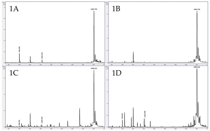 A typical BoNT/A positive control from the Bruker MALDI Biotyper has an intact peptide substrate at 2406 m / z and two peptide fragments at 998 and 1426 m / z ( 1A ); One patient exhibited negative BoNT/A in serum ( 1B , 14-17944-01); however, a low concentration of BoNT/A was detected by MS in stool from the same patient ( 1C , 14-17944-02), whereas the mouse bioassay was negative for both specimen types. The patient specimen results were later confirmed when the contaminated food the patient ingested was positive for BoNT/A by MS ( 1D , 14-18209) and the mouse bioassay.