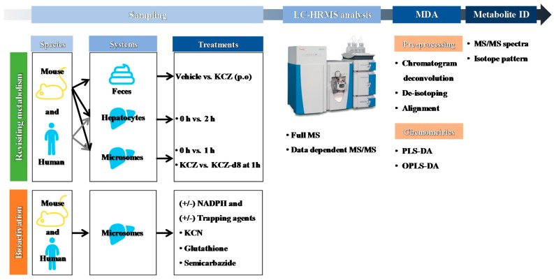 Schematic workflow for the metabolite profiling of ketoconazole using liquid chromatography–high resolution mass spectrometry (LC-HRMS)-based metabolomics. KCZ: ketoconazole, NADPH: reduced form of nicotinamide adenine dinucleotide phosphate, KCN: potassium cyanide, MS/MS: tandem mass spectrometry, MDA: multivariate data analysis, PLS-DA: partial least squares discriminant analysis, OPLS-DA: orthogonal partial least squares discriminant analysis.