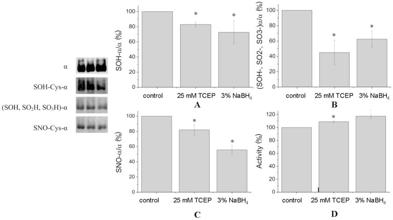 Chemical modifications of the α1-subunit ( A – C ) and changes in Na,K-ATPase activity ( D ) after treatment of the enzyme by TCEP (25 mM) and sodium borohydride (3%). The Na,K-ATPase was incubated with or without reducing agent for 30 min at 37 °C. The left panel depicts immunoblotting with staining by antibodies against α1-subunit by antibodies against sulfenic acid (Cys-SOH), against all oxidized SH-groups (Cys-SOH, Cys-SO 2 H, Cys-SO 3 H), and against nitrosylated cysteine thiols (Cys-SNO). Diagrams representing densitometric analysis of immunoblots: ( A ) α1-subunit stained using antibodies against sulfenic acid (Cys-SOH); ( B ) α1-subunit stained using antibodies against all oxidized SH-groups (Cys-SOH, Cys-SO 2 H, Cys-SO 3 H); ( C ) α1-subunit stained using antibodies against S -nitrosylated cysteine thiols (Cys-SNO). The bars are normalized to the α1-subunit content stained by antibodies against α1-subunit after stripping (number of experiments: N = 3). Data are presented as means ± SD of independent experiments. * p