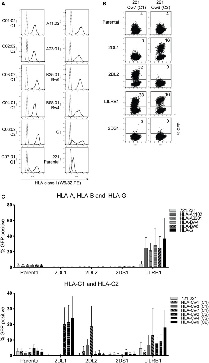KIR2DS1 reporter cells are not activated by conventional human leukocyte antigen (HLA) class I molecules . (A) The 721.221-HLA transfectants were stained with W6/32 (black line), and measured by flow cytometry. IgG2a antibody was used as isotype control (dotted line). (B) Dot plots of a selection of representative data from the same experiment. A coculture of the indicated reporter cells together with 721.221 cells containing HLA-C07:01 (221 Cw7, C1) or HLA-C06:02 (221-Cw6, C2) is shown. GFP expression was determined by flow cytometry. The E:T ratio was 1:3. (C) The data are depicted as the mean ± SD of individual samples collected from five independent experiments.