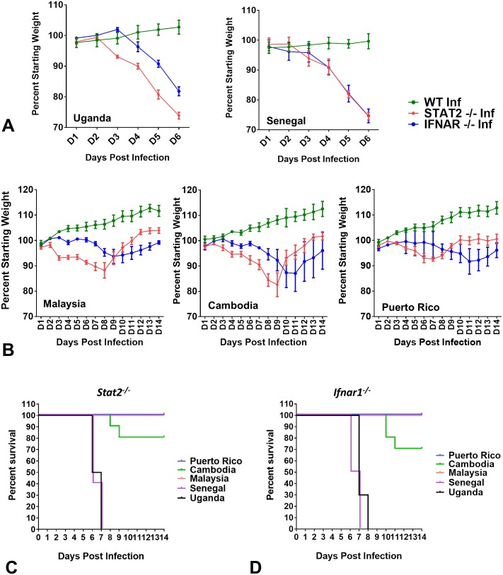 Comparison of weight loss and mortality induced by African and Asian ZIKV strains in mice. Five to six week old male WT, Stat2 -/- and Ifnar1 -/- C57BL/6 mice (n = 5) were injected with 1,000 PFU of the indicated ZIKV strain by the subcutaneous route in the footpad. (A, B) Mice were weighed daily and weights are expressed as percentage of body weight prior to infection. Results shown are the mean ± standard error of the mean (SEM). (A) Data are censored at 6 days after infection, as some mice died. (C, D) In a parallel group, male mice (n = 5) of the indicated genotype were infected with indicated ZIKV strains under similar conditions and data were combined with body weight loss group for survival analysis (total n = 10). ZIKV strains are abbreviated as UG (Uganda), SN (Senegal), ML (Malaysia), CB (Cambodia) and PR (Puerto Rico).