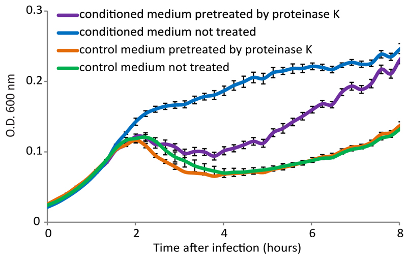 <t>Proteinase</t> K treatment reduces the effect of conditioned medium. Growth curves of B. subtilis 168 infected by phi3T at MOI=0.1, in control and conditioned media, with and without pre-treatment with proteinase K. Data represent average of 3 technical replicates, and error bars represent standard error.
