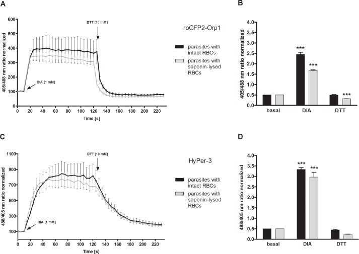 Dynamic range of roGFP2-Orp1 and HyPer-3 in transfected parasites within intact RBCs and after host cell lysis. After 15 s baseline monitoring, 3D7 parasites with intact or lysed host cells and transfected with roGFP2-Orp1 ( A ) or HyPer-3 ( C ) were exposed to 1 mM DIA and monitored for 2 min before adding 10 mM DTT at the CLSM. The fluorescence ratios (405/488 nm, 3D7 [roGFP2-Orp1] and 488/405 nm, 3D7 [HyPer-3] ) ( A, C ) at different time points are plotted against time. 3D7 [HyPer-3] ( C ) showed a higher DIA sensitivity than 3D7 [roGFP2-Orp1] ( A ) in both parasites residing in intact RBCs and those deprived of their host cell. Data from at least three trophozoites in three independent experiments were analyzed per data point. For measuring the dynamic range of both redox sensors in the parasites, the 405/488 nm ratio (3D7 [roGFP2-Orp1] ) ( B ) and the 488/405 nm ratio (3D7 [HyPer-3] ) ( D ) of fully oxidized and reduced probes were computed. The basal ratio, the ratio for 1 mM DIA, and 10 mM DTT after 2 min incubation (n > 27) of 3 independent experiments are shown. 3D7 [roGFP2-Orp1] ( B ) and 3D7 [HyPer-3] ( D ) with intact RBCs exhibited dynamic ranges of 5 and 7.3, respectively. The dynamic ranges for parasites after RBC lysis of 3D7 [roGFP2-Orp1] ( B ) and 3D7 [HyPer-3] ( D ) were 5.5 and 12.6, respectively. Mean values and standard error of the mean (SEM) are shown for all experiments. A one-way ANOVA test with 95% confidence intervals with the Dunnett's Multiple Comparison Test was applied for statistical analysis of significance (*, p