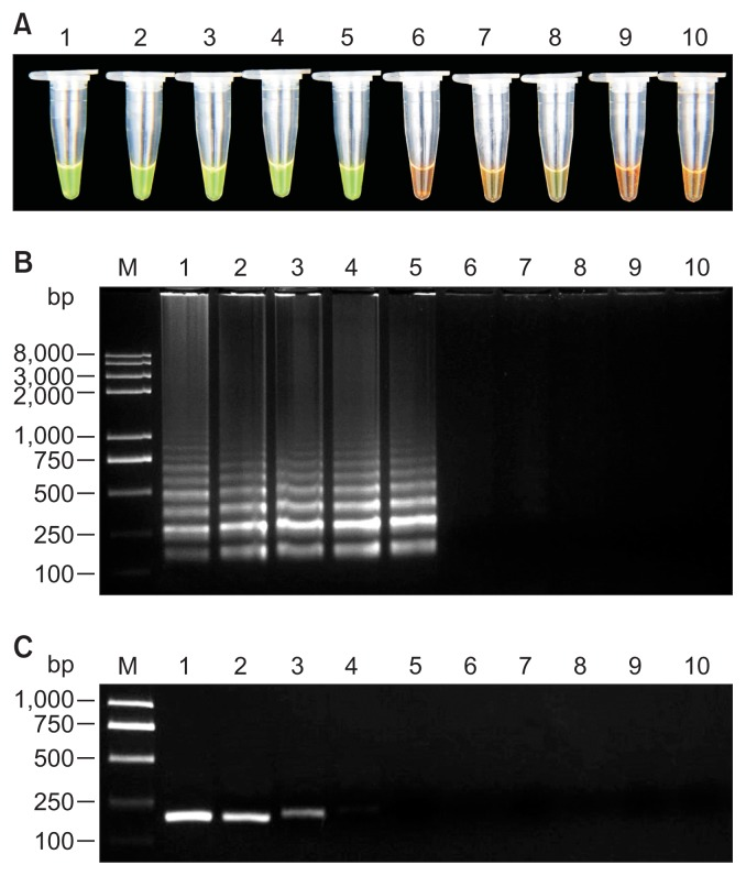 Sensitivity assessment of loop-mediated isothermal amplification (LAMP) assay and conventional <t>PCR</t> for detection of Tylenchulus semipenetrans . (A) Visual examination of LAMP products by adding SYBR Green I fluorescence dye. (B) Agarose gel electrophoresis of LAMP products. (C) Agarose gel electrophoresis of conventional PCR products. Tubes and lanes 1–9, genomic <t>DNA</t> from 100, 10, 1, 10 −1 , 10 −2 , 10 −3 , 10 −4 , 10 −5 , 10 −6 J2/0.5 g of soil, respectively; tube and lane 10, no template control; lane M, molecular marker.