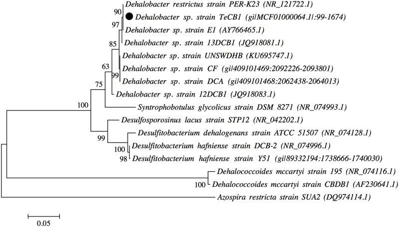 Maximum likelihood 16S rRNA gene tree of Dehalobacter sp. strain TeCB1, along with other Dehalobacter strains, OHRB and bacterial species. Sequence alignment and tree construction were performed with MEGAv.6 ( Tamura et al., 2013 ). Numbers adjacent to tree branches represent percentage of branch support based on 1000 bootstrap re-sampling. Scale bar shows an evolutionary distance 0.05 nucleotide substitutions per site. Numbers adjacent to bacterium names indicate GenBank accession numbers, the project version and the location of 16S rRNA gene within the genome. Dehalococcoides mccartyi (strains CBDB1 and 195) and Azospira restricta strain SUA2 were used as outgroups.