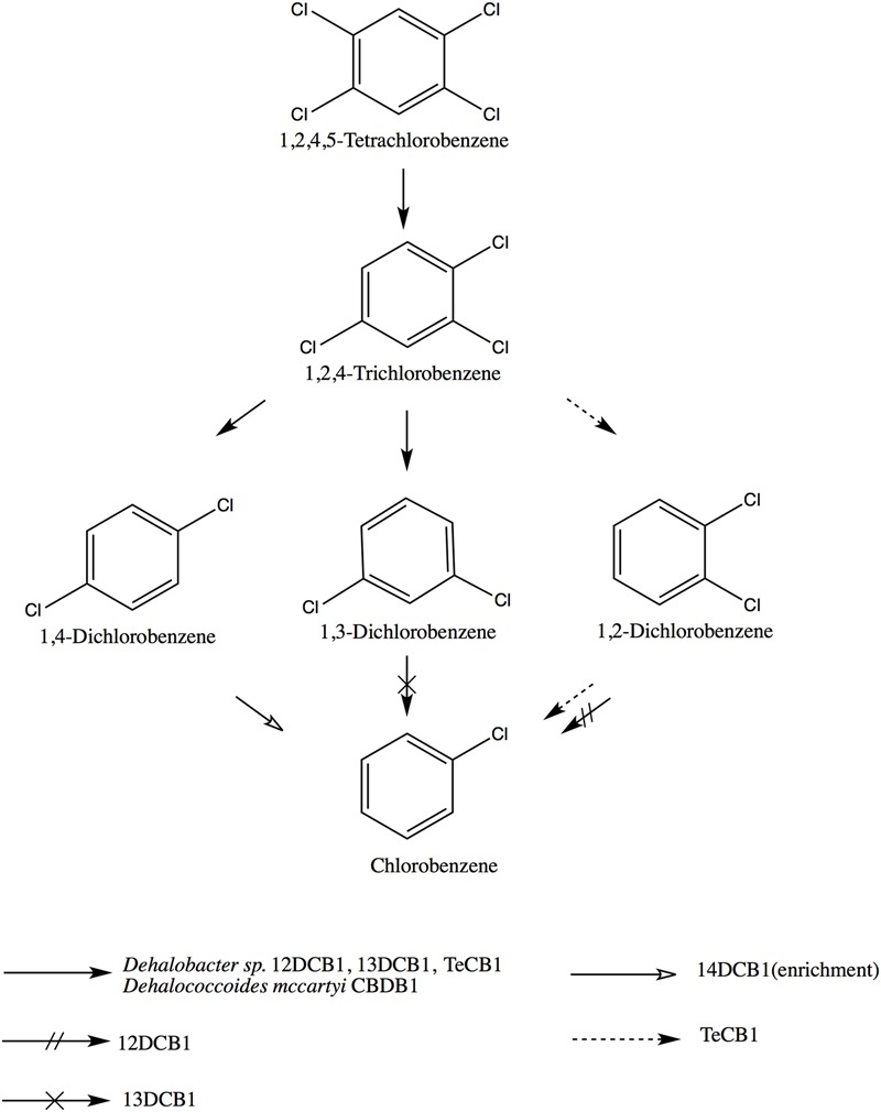 Reductive dechlorination of 1,2,4,5-TeCB by different OHRB, including: Dehalobacter sp. strain TeCB1 and Dehalobacter sp. strains 12DCB1, 13DCB1, 14DCB1 ( Nelson et al., 2014 ), and Dehalococcoides mccartyi CBDB1 ( Adrian et al., 2000 ). Note, chlorobenzene production by strain TeCB1 is co-metabolic.