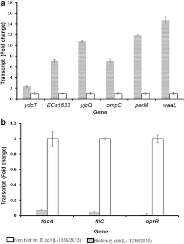 Real-time PCR validation of the expression of genes in biofilm ( closed box ) and non-biofilm cells ( hatched box ) of E. coli (L-1216/2010) and E. coli (L-1339/2013) ( open box ) respectively. a Relative expression of up-regulated genes and b Relative expression of down-regulated gene