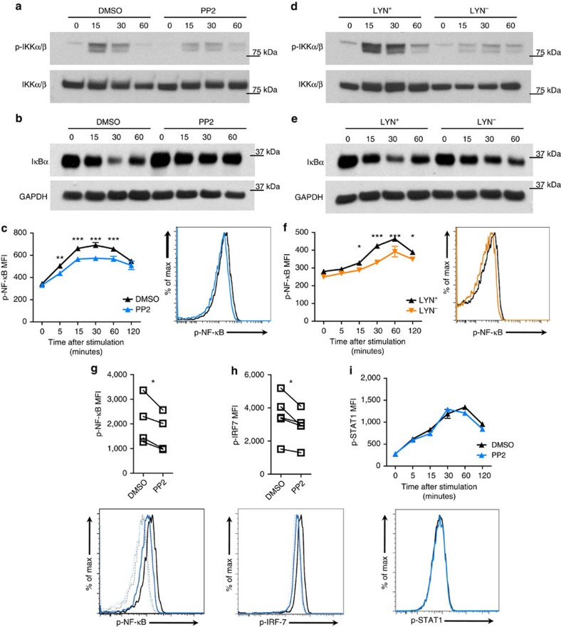 <t>SFKs</t> are necessary for TLR signalling events in human pDCs. ( a – f ) WT or LYN − ( d – f ) CAL-1 cells were pre-treated for 1 h with <t>PP2</t> (10 μM; a – c ; blue) or DMSO control ( a – c ; black) or left untreated ( d – f ; black: LYN + , orange: LYN − ), before stimulation with R848 for the indicated time periods (minutes). Level of p-IKKα/β and total IKKα/β ( a , d ) as well as IκBα ( b , e ) and GAPDH were assessed by immunoblot. p-NF-κB was determined by flow cytometry. The histogram depicts the 15 min time point ( c , f ). ( g , h ) Human PBMCs were pre-treated as in c and stimulated for 15 min with R848. p-NF-κB ( g ) and p-IRF-7 ( h ) were determined by flow cytometry in gated pDCs. Lines in graphs connect the same donor and histograms depict one representative donor; dotted lines, unstimulated; solid lines, R848 stimulation. ( i ) CAL-1 cells were pre-treated as in c before stimulation with recombinant IFN-β (1,000 U ml −1 ) for the indicated time periods (minutes). p-STAT1 were determined by flow cytometry. Histogram depicts the 30 min time point. Data are representative of two ( b , e , f , i ) or three ( a , c , d ) independent experiments and four ( g ) or five ( h ) donors processed separately. Graphs depict mean±s.d. of replicates within one representative experiment ( a – f , i ) or individual donors ( g , h ). Two-way ANOVA ( c , f , i ) and two-ways Student's t -test ( g , h ) were used for statistical analyses. * P