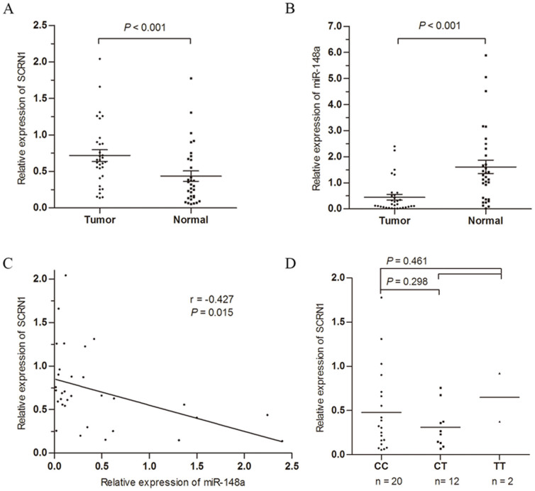 Effect of the miR-148a and SNP rs6976789 on the expression of SCRN1 in gastric cancer. Relative expression levels of (A) SCRN1 mRNA and (B) miR-148a were detected in 32 pairs of human gastric cancer tissues and adjacent normal tissues via qRT-PCR. Abundance of and SCRN1 mRNA and miRNA was normalized to GAPDH and U6 RNA, respectively. (C) Spearman's correlation analysis of SCRN1 mRNA expression levels to miR-148a in 32 gastric cancer tissues. (D) Association between rs6976789 polymorphism and SCRN1 mRNA levels in gastric cancer cases.