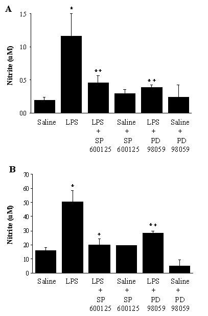 NO production in BAL fluid (A) and alveolar macrophages in culture (B). The groups represent rats treated as follows: Saline, saline (IT); LPS, LPS (IT); LPS-SP600125, LPS (IT) and a pretreatment with SP600125 (IO), Saline-SP600125, saline (IT) and a pretreatment with SP600125 (IO); LPS-PD98059, LPS (IT) and a pretreatment with PD98059 (IO), Saline-PD98059, saline (IT) and a pretreatment with PD98059 (IO). Animals were sacrificed 4 hours after LPS treatment. Alveolar macrophages (10 6 /m1 of RPMI medium) were incubated for 24 hours. BAL fluid and culture supernatants were analyzed using nitrite assays. Values are represented as means ± SEM of results from 5 rats in each group. * Significant differences compared with saline, p