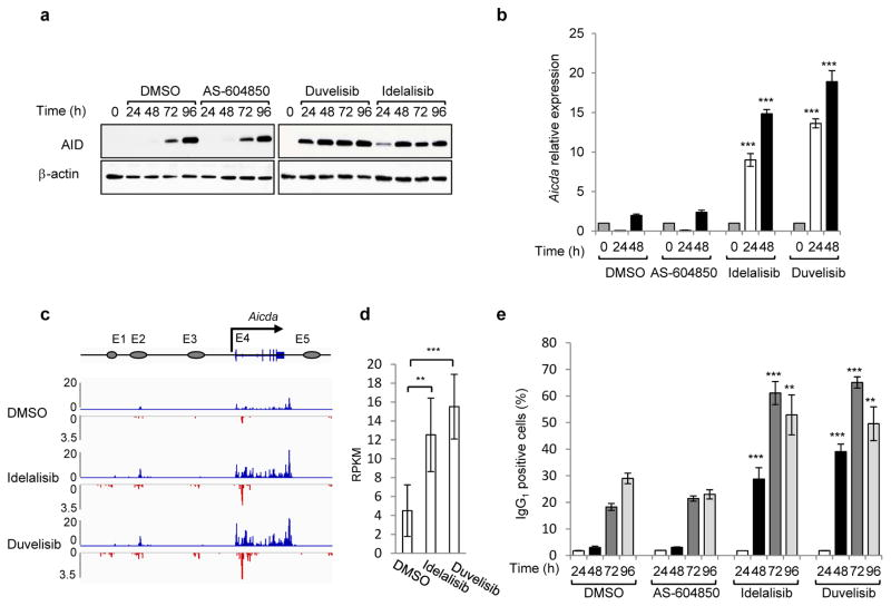 Phosphatidylinositol 3-Kinase (PI3K)δ blockade increases AID expression and CSR in activated mouse B cells a , Western blot for AID protein from B cells treated with the indicated inhibitors (1 μM) (n = 3 biological replicates). For gel source data, see Supplementary Figure 1 . b , Aicda mRNA levels were analyzed by qRT-PCR. Data are expressed as mean ± s.d. (n = 3 biological replicates).. ** P ≤ 0.01, *** P ≤ 0.001, two-tailed Student's t -test from idelalisib or duvelisib vs DMSO-treated B cells. c, GRO-Seq profiles of Aicda gene in B cells at 48 h after activation (n = 2 biological replicates). Blue profiles: sense transcription, Red profiles: antisense transcription. d, Quantification of GRO-Seq sense and antisense reads per kilobase per million mapped reads (RPKM) in the Aicda gene, ** P ≤ 0.01 ,***P ≤ 0.001, multiple test adjusted. e, IgG 1 CSR in activated B cells. Data are expressed as mean ± s.d. (n = 3 biological replicates). ** P ≤ 0.01, *** P ≤ 0.001, two-tailed Student's t -test from idelalisib or duvelisib vs DMSO treated B cells