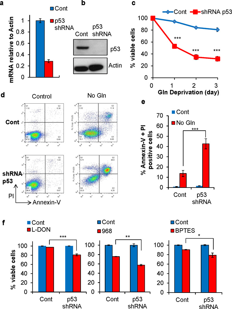 Loss of mutp53 sensitizes cancer cells to glutamine deprivation and glutaminase inhibitor treatment (a–b) p53 mRNA levels (a) relative to actin and protein levels (b) in control vector and p53 shRNA transduced CA46 cells was assessed using qRT-PCR and Western blot. (c) The indicated control vector or shRNA p53 transduced cells were cultured in complete or Gln free medium for the indicated time points. Viability was assessed by PI exclusion and normalized to cells cultured in complete medium. Data represent mean ± S.D. of three independent experiments (*** P ≤.001, Student's t test). (d–e) Annexin-V and PI staining of stably transfected CA46 cells cultured in Gln free medium or complete medium for 24 hrs. Representative graphs of cells in late apoptosis (annexin-V and PI positive) are shown. Data represent mean ± S.D. of three independent experiments (*** P ≤.001, Student's t test). (f) The control vector transduced cells and p53 shRNA transduced cells were treated with 12.5µM L-DON for two days, 40µM Compound 968 and 50µM BPTES for four days. Cell viability was assessed by PI exclusion and normalized to control treated cells. Data represent mean ± S.D. of three independent experiments (* P