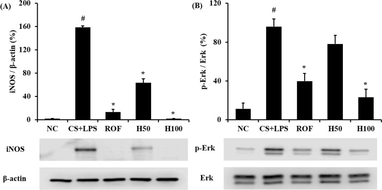 HemoHIM inhibited the iNOS and phosphorylation of ERK expression in lung tissue. (A) Expression of iNOS. (B) Phosphorylation of ERK. (C and D) Quantitative analysis of iNOS expression and phosphorylation of ERK expression. NC: Non-induced mice; CS+LPS: CS and LPS induced mice; ROF: roflumilast (10 mg/kg) and CS and LPS induced mice; H50: HemoHIM (50 mg/kg) and CS and LPS induced mice; H100 (100 mg/kg) and CS and LPS induced mice. The values are expressed as the means±SD. # Significantly different from the control mice, P