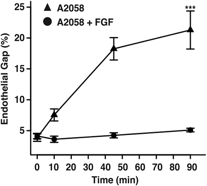Stabilization of endothelial <t>VE-cadherin</t> junctions blocks melanoma-induced gap formation and subsequent endothelial barrier breakdown. HPMEC monolayers were treated with FGF1 for 1 hour and immediately cultured in direct contact with A2058 melanoma cells for 0, 10, 45 and 90 min. Endothelial cell junctions were immunostained with anti-VE-cadherin and gap formation was quantified as the number of pixels within gap regions over the number of pixels within the entire image. Results represent the mean +/−SEM, (***p