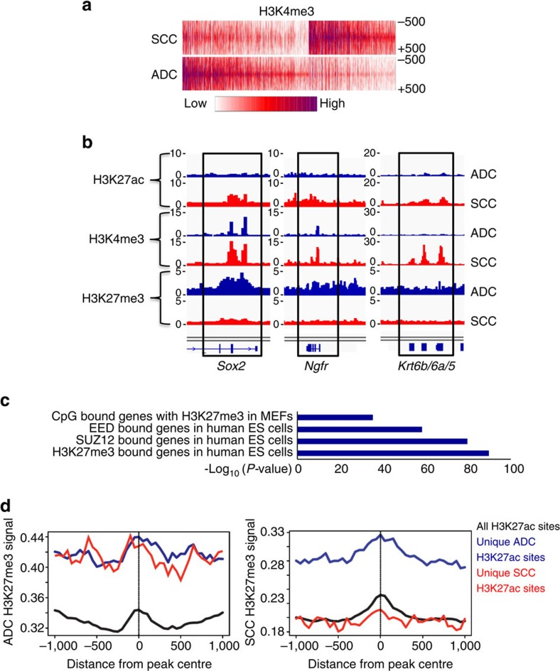 Chromatin landscapes of ADC and SCCs reveal de-repression of squamous genes. ( a ) Heatmap depicting global analysis of H3K4me3 marked chromatin in ADC and SCC from KRAS /Lkb1 mice. ( b ) Genome browser snapshots of the squamous loci Sox2 , Ngfr and Krt6b/6a/5 with the indicated ChIP-sequencing peaks for H3K27ac, H3K27me3 and H3K4me3 in the ADC (blue) and SCC (red) KRAS /Lkb1 tumour samples. ( c ) GREAT analysis of genes adjacent to H3K4me3-enriched sites specific to SCC showed that this gene set is enriched for genes (from MSigDB) that are normally repressed by Polycomb in other cell types. Graphed as -log10 ( P value represents hypergeometric probability test.) Level of H3K27me3 marks at all loci enriched for H3K27ac (black), loci with H3K27ac unique to ADC (blue) or loci with H3K27ac unique to SCC (red) in either ADC (left panel) or SCC (right panel) from KRAS /Lkb1 mice. See also Supplementary Fig. 5a–c .