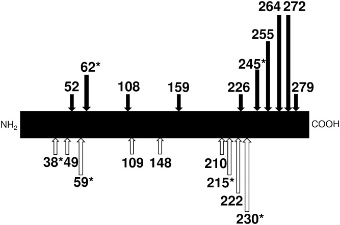 All the SNPs originated from frameshift/nonsense mutations in the DNase 1L2 gene. The position of the amino acid residue, in the codon of which mutations occur, are shown on the precursor of the DNase 1L2 protein presented as a solid bar. When the DNase 1L2 activities of the conditioned medium from the cells transfected with the constructs corresponding to each mutation marked with solid arrow were determined using the SRED method [ 16 ], no activity from all the construct examined could be detected under our assay conditions. SNPs marked with asterisk are generated by nonsense mutation.