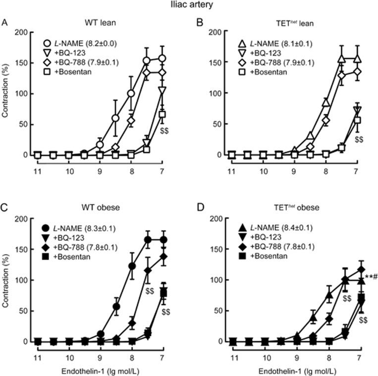 Contractions to endothelin-1 (ET-1) in iliac arterial rings from lean (A and B) and obese (C and D) wild-type (WT) mice and mice with heterozygous endothelial overexpression of the prepro-ET-1 gene (TET het ). All the experiments were performed in the presence of L- NAME (3×10 −4 mol/L) and BQ-123, BQ-788, or bosentan (all 10 −6 mol/L). The data are expressed as the percentage of reference contractions to a 60 mmol/L high potassium solution, and the negative logarithms of the calculated concentrations that cause a half maximal responses (pD 2 values in brackets where calculation possible) are given as the mean±SEM; n =6–9. ** P