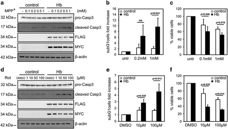Hb increases susceptibility to cell death in cellular model of PD. Differentiated Hb cells (Hb) and control cells (control) were treated with MPP + ( a–c ) or rotenone ( d–f ) at the indicated concentrations for 16 h. ( a and d ) Western blotting analysis of cleaved Caspase-3 (cleaved Casp3) expression. α - and β -Globins were detected with anti-FLAG and anti-MYC antibodies, respectively. For normalization, the levels of pro-Caspase-3 (pro-Casp3) were detected. β -Actin was used as a loading control. ( n =3, n =3) ( b and e ) FACS analysis. Percentage of subG1 cells is expressed as fold increased relative to untreated cells, arbitrary set to 1. ( n =3, n =4) ( c and f ) WST-1 analysis. In graph are represented the percentage of viable cells relative to untreated cells, arbitrary set to 100%. ( n =4, n =3) Values are mean±S.D. Data were evaluated statistically by Student's t -test. Resulting P -values are indicated (NS=not significant)