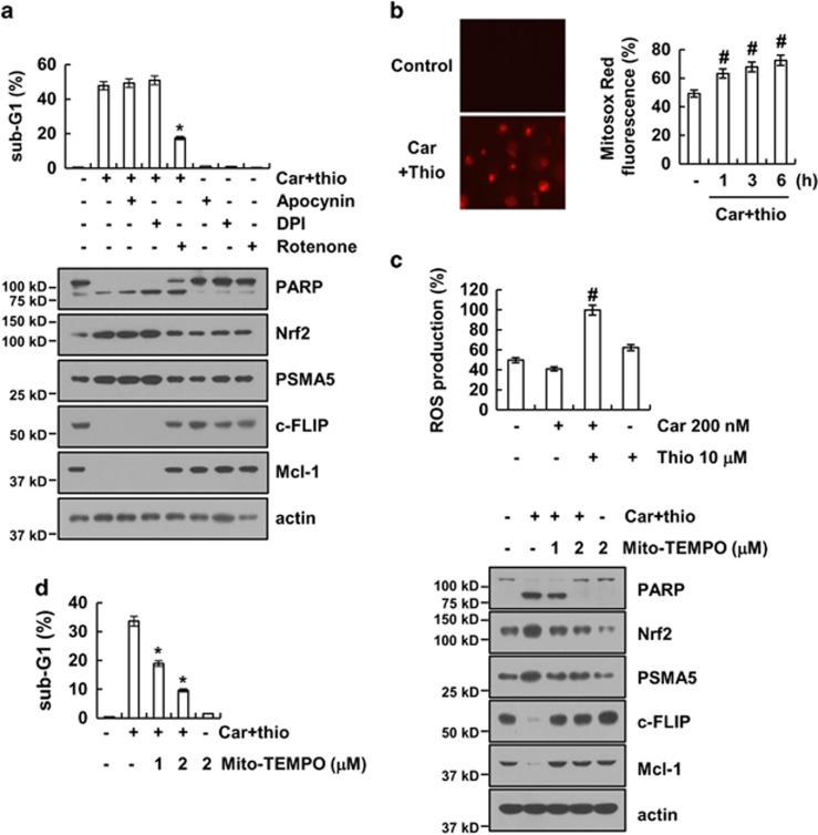 Mitochondrial reactive oxygen species are important for carboplatin plus thioridazine-induced apoptosis. ( a ) AMC-HN4 cells were pretreated with 100 μ M apocynin, 50 nM DPI, and 20 nM rotenone for 30 min followed by stimulation with 200 nM carboplatin plus 10 μ M thioridazine for 24 h. The sub-G1 fraction was measured by flow cytometry. The protein expression levels of PARP, Nrf2, PSMA5, c-FLIP, Mcl-1, and actin were determined by western blotting. The level of actin was used as a loading control. ( b ) AMC-HN4 cells were treated with 200 nM carboplatin plus 10 μ M thioridazine for 3 h (left panel) or the indicated time periods (right panel). The cells were then loaded with the Mitosox Red fluorescent dye. The Mitosox Red fluorescence intensity was detected by a fluorescence microscope (left panel) and flow cytometry (right panel). ( c ) AMC-HN4 cells were treated with 200 nM carboplatin in the presence or absence of 10 μ M thioridazine for 6 h. The cells were then loaded with the H 2 DCF-DA fluorescent dye. The H 2 DCF-DA fluorescence intensity was detected by flow cytometry. ( d ) AMC-HN4 cells were pretreated with the indicated concentrations of Mito-TEMPO and were then added with 200 nM carboplatin plus 10 μ M thioridazine for 24 h. The sub-G1 fraction was measured by flow cytometry. The protein expression levels of PARP, Nrf2, PSMA5, c-FLIP, Mcl-1, and actin were determined by western blotting. The level of actin was used as a loading control. The values in a , b , c , and d represent the mean±S.D. from three independent samples. * P