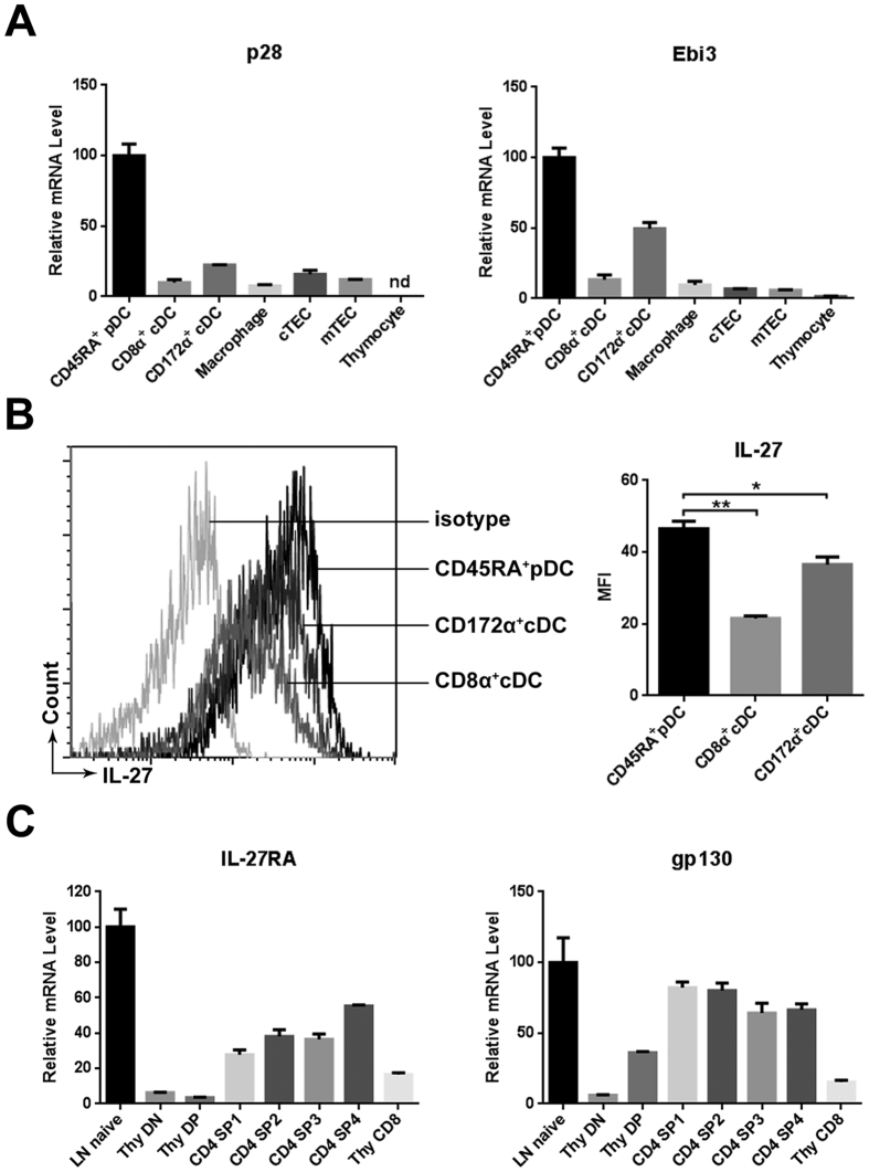 IL-27 and its receptor expression in the thymus. ( A ) Total thymocyte, CD11c int CD45RA + pDC, CD11c hi CD8α + CD172α − and CD11c hi CD8α − CD172α + cDC, CD45 − Epcam hi Ly51 + cTEC, CD45 - Epcam hi Ly51 - mTEC and CD11b + F4/80 + macrophage were isolated from C57BL/6J mice. The expression of p28 and EBI3 mRNA was evaluated by quantitative PCR. nd, no detectable. ( B ) IL-27 protein expression in pDC, CD8α + and CD172α + cDC was analyzed by flow cytometry following intracellular staining with anti-IL-27. Representative histograms are shown on the left and the mean fluorescence intensity (MFI) on the right. ( C ) Purified DN, DP, CD8 SP and the four subsets of CD4 SP (SP1-4) thymocytes were analyzed for IL-27RA and gp130 mRNA expression using quantitative PCR. The lymph node (LN) naïve T cell was used as a positive control. All the experiments were repeated for more than three times and the data are shown as mean ± s.d. * p