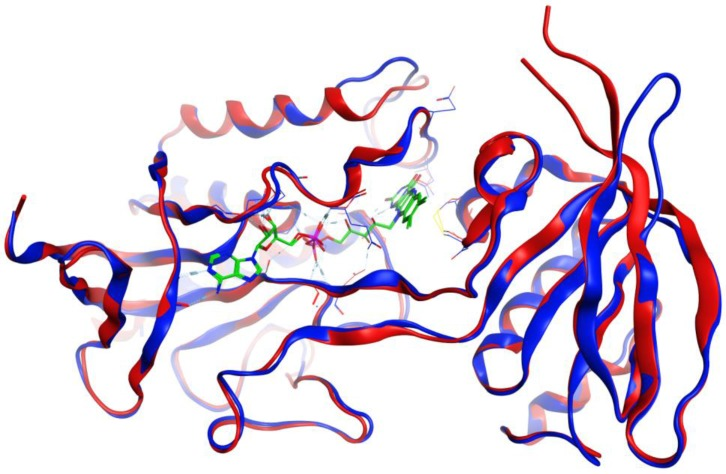 Overlay of the protein structures of Brucella melitensis TxR, PDB 4JNQ [ 24 ] (red ribbon), and the homology model of Trichomonas vaginalis TxR (blue ribbon). The co-crystallized ligand is shown as a wireframe structure.