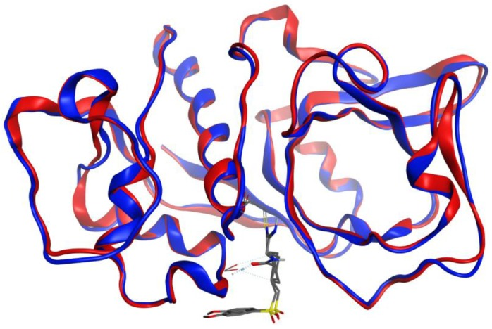 Overlay of the protein structures of rabbit ( Oryctolagus cuniculus ) cathepsin K, PDB 2F7D [ 25 ] (red ribbon), and the homology model of Trichomonas vaginalis papain-like protein, TvCP2 (blue ribbon). The co-crystallized ligand is shown as a wireframe structure.
