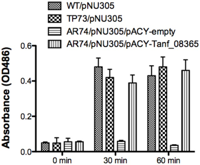Reporter assay for detection of AmpG permease activity. The <t>β-lactamase</t> assay was performed on Escherichia coli strains BW25113 (parental strain), TP73 (Δ ampD )/pNU305, AR74 (Δ ampG/ Δ ampD )/pNU305/ pACY-AR1 (empty vector), and AR74/pNU305/pAC-Tanf_08635. Activity was determined by chromogenic nitrocefin substrate induced at 0, 30, 60 min and absorbance was measured at OD 486 . Data are representative of three independent experiments with similar results. Each value represents the mean (±SD) of three values measured in one representative assay.