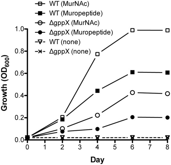 Growth of Tannerella forsythia on muropeptides. Growth of T. forsythia wild-type and ΔgppX in M9 liquid medium supplemented with 0.2% muropeptides or 0.2% MurNAc was measured at OD 600 . Results of one out of three independent cultivations with similar outcome are given.