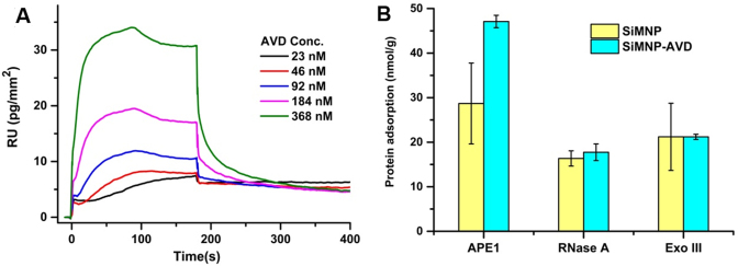 ( A ) SPR measurement results of the interactions between immobilized APE1 and avidin. ( B ) Selective binding of APE1 by immobilized avidin. For comparison, RNase A which has the same pI as APE1 and Exo III which has the same molecular weight as APE1 were also tested. All experiments were repeated at least three times.