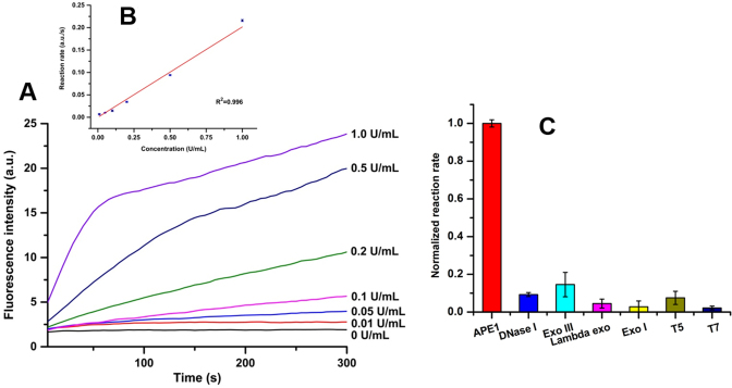 ( A ) Fluorescence responses of Nanoprobe A (0.1 mg/ml) to APE1 at different concentrations. ( B ) Linear calibration curve for detection of the activity of APE1. The linear regression equation is F = 0.20 c (U/ml) – 2.1 × 10 −4 , and the detection limit is 0.01 U/ml. ( C ) Selectivity of Nanoprobe A toward APE1 (2.0 U/ml) over other nucleases. (DNase I: 5.0 U/ml; Exo III: 4.0 U/ml; lambda exo: 66.7 U/ml; Exo I: 12.5 U/ml; T5: 5.0 U/ml; T7: 50 U/ml). All experiments were repeated at least three times.