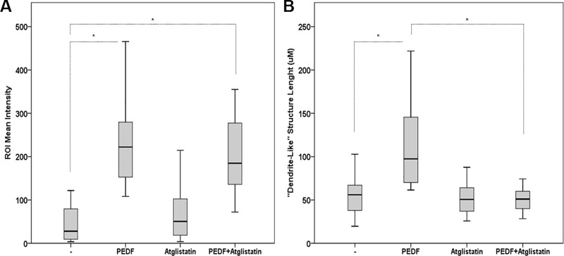 Effect of Atglistatin on macrophages differentiation and phagocytic activity. ( A ) Quantification analyses of PCa cell phagocytosis in CL1-Ctrl/RAW 264.7 co-cultures treated with PEDF (10 nM), Atglistatin (40 μM) or PEDF/Atglistatin combination. Data points represent ROI mean intensity ± SD of triplicate samples per treatment condition from two independent experiments. ( B ) Quantification analyses of the «dendrite-like» structure length using the ImageJ software. Data points show the mean ± SD of triplicate samples per treatment condition from two independent experiments. Statistical analyses were performed using the Welch and Brown-Forsythe tests followed by the Games-Howell test, *: p