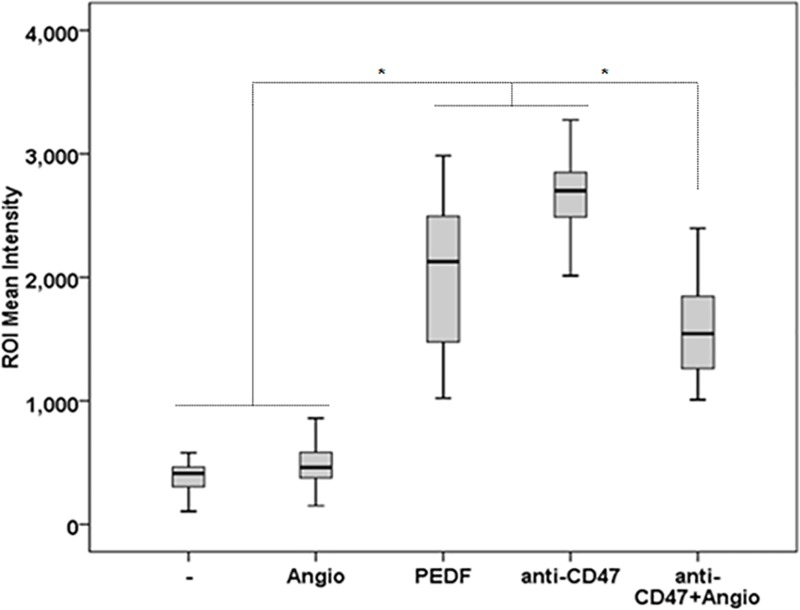 Effect of α-CD47 and Angiostatin combination on the phagocytosis of CL1 cells. Quantification analyses of PCa cell phagocytosis in CL1-Ctrl/RAW 264.7 co-cultures treated with α-CD47 (100 ng/μl) or Angiostatin (10 nM) alone or in combination. Data points represent ROI mean intensity ± SD of triplicate samples per treatment condition from two independent experiments. Statistical analyses were performed using the Welch and Brown-Forsythe tests followed by the Games-Howell test, *: p
