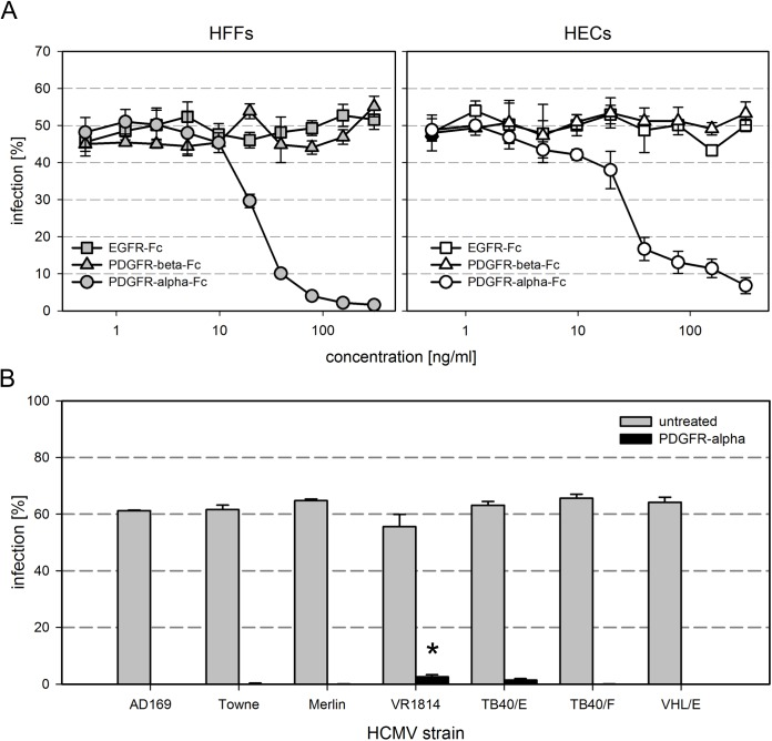 The inhibitory effect of soluble PDGFR-alpha is specific and affects various HCMV strains. (A) PDGFR-alpha-Fc, PDGFR-beta-Fc and EGFR-Fc were compared regarding their inhibitory potential on infection of fibroblasts (HFFs) and endothelial cells (HECs) by HCMV strain TB40/E. Virus preparations were pretreated for 2 h with the respective growth factor receptor at indicated concentrations and then added to cell cultures for 2 h, followed by a medium exchange and incubation overnight. Cells were fixed and stained for viral IE antigens. The percentage of infection was calculated as the ratio of IE antigen-positive cells / total cell number. (B) The potential of PDGFR-alpha-Fc to inhibit fibroblast infection with various HCMV strains was tested using a collection of strains representing the known glycoprotein variants. The virus preparations were either preincubated with medium (no drug) or medium containing 250 ng/ml PDGFR-alpha-Fc. Error bars in (A) and (B) represent the standard error of the mean (SEM). The significant difference of VR1814 as compared to the other strains is indicated by an asterisk.