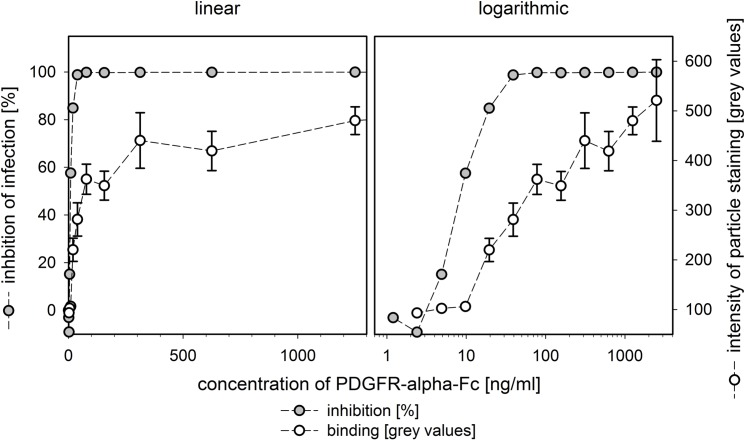 Quantification of PDGFR-alpha-Fc binding to HCMV particles. Virus preparations of strain TB40/E were preincubated with serial dilutions of PDGFR-alpha-Fc. Viruses were attached to fibroblasts by incubation on ice for 90 min followed by acetone fixation. Binding of PDGFR-alpha-Fc was assessed by direct immunofluorescence of the Fc-fusion part and quantification of signal intensities (maximum grey values per particle). In parallel, fibroblasts were incubated with the same mixtures at 37°C and stained for viral immediate-early antigens at one day postinfection to determine the fraction of infected cells. The intensity of the staining with PDGFR-alpha-Fc was measured for 100 particles in each condition. The same data set is provided with a linear scale and a logarithmic scale. Error bars indicate the error of the median.
