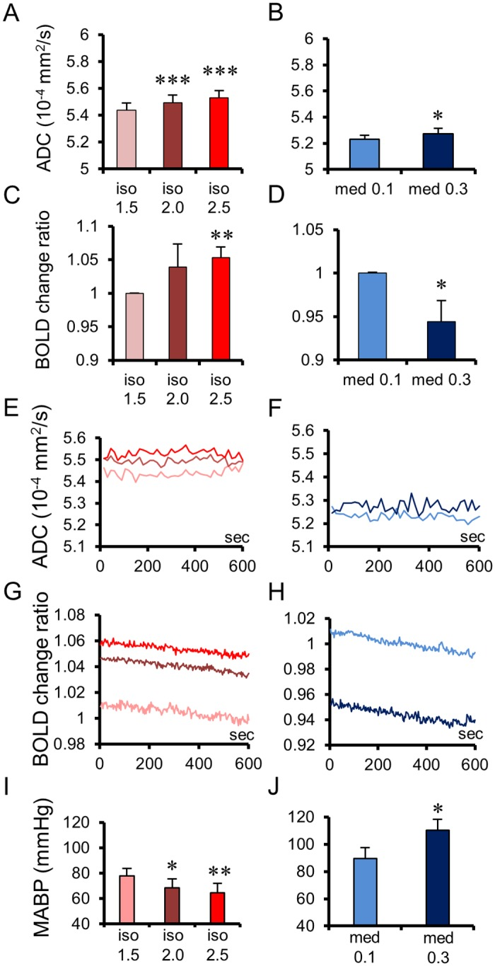 Apparent Diffusion Coefficient (ADC) and Blood Oxygenation Level—Dependent (BOLD) changes and time courses for each dosage of both anesthetic conditions. Averaged ADCs of whole brains for each dosage of isoflurane (A; n = 10) and <t>medetomidine</t> (B; n = 8). Averaged BOLD signal change ratios of whole brain for each dosage of isoflurane (C; n = 6) and medetomidine (D; n = 7). Averaged time courses of ADCs (E, F) and BOLD signal changes ratios (G, H) at whole brains for each dosage of isoflurane (E, G) and medetomidine (F, H), showing the stability of the ADC change while the BOLD signal exhibits a significant negative drift with time. Note that the BOLD change levels for each medetomidine dosage are inverted between E and H. Mean arterial blood pressure (MABP) under each dosage of isoflurane (I; n = 5) and medetomidine (J; n = 5). Bar plots exhibit mean ± standard error of the mean (SEM). * p