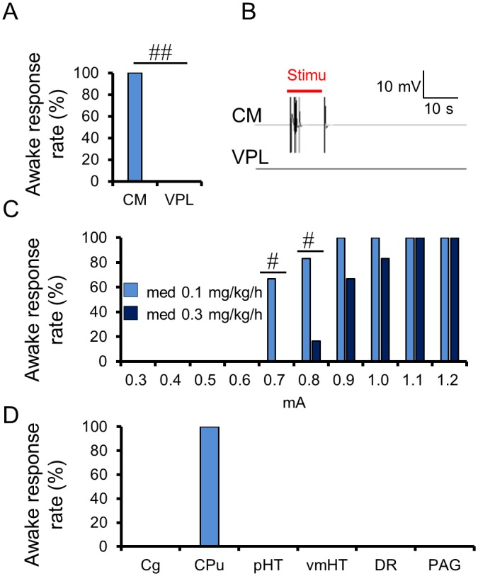 Effects of electrical stimulation of the Central Medial thalamus nucleus (CM) on anesthetic status. (A) Percentage of animals exhibiting an awake response during the electrical stimulation at the CM and VPL under 0.1 mg/kg/h medetomidine condition ( n = 6). (B) Representative electromyography (EMG) signals of the stimulation, with 0.8 mA amplitude at the CM and the VPL under 0.1 mg/kg/h medetomidine. (C) Percentage of animals exhibiting an awake response during the electrical stimulation at the CM, with an amplitude of 0.3–1.2 mA under 0.1 and 0.3 mg/kg/h medetomidine ( n = 6). (D) Percentage of animals exhibiting an awake response during the electrical stimulation at the six brain locations under 0.1 mg/kg/h medetomidine ( n = 4). # p