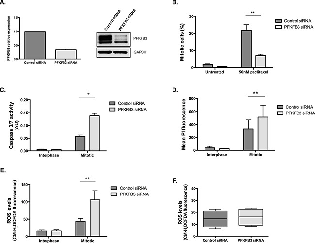 PFKFB3 is important for cell survival during paclitaxel-induced mitotic arrest A . PFKFB3 mRNA and protein expression after siRNA-mediated depletion of PFKFB3 for 72 h was determined by qPCR and western blotting. B . The quantification of mitotically arrested cells by flow cytometry, C . caspase 3/7 activity using Caspase-Glo 3/7 assay D . <t>propidium</t> iodide incorporation by flow cytometry and E . ROS levels using CM-H2DCFDA staining and flow cytometry were assessed after siRNA-mediated depletion of PFKFB3 for 72 h followed by 50 nM paclitaxel for 16 h and a mitotic shake-off in SKOV3 cells. F . The levels of ROS after PFKFB3 depletion alone, without paclitaxel treatment or mitotic cell isolation, was also analysed using CM-H2DCFDA staining and flow cytometry. Data are expressed as +SEM of three experiments.