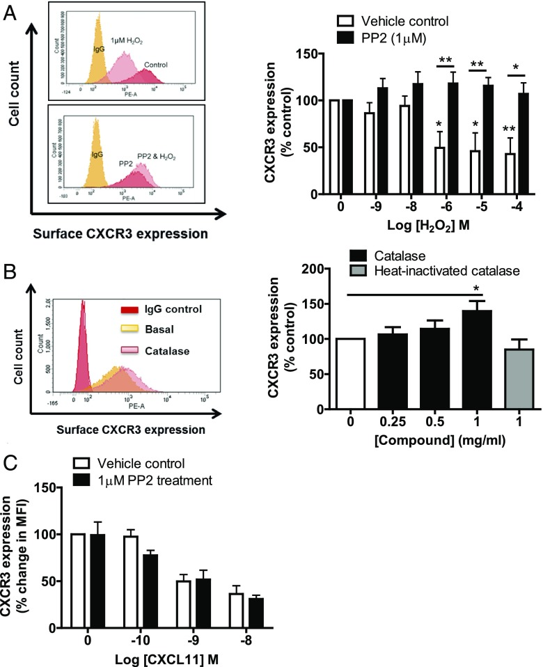 Exogenous H 2 O 2 requires Src kinase to reduce surface expression of CXCR3. ( A ) The left panel shows representative FACS plots from a single donor showing the effect of H 2 O 2 on CXCR3 expression in SEB-activated T lymphocytes with or without <t>PP2</t> (1 μM) treatment. The right panel shows the mean ± SEM of three independent donors, normalized to the untreated control. Statistical significance was determined by a two-way ANOVA with a Bonferroni posttest. * p