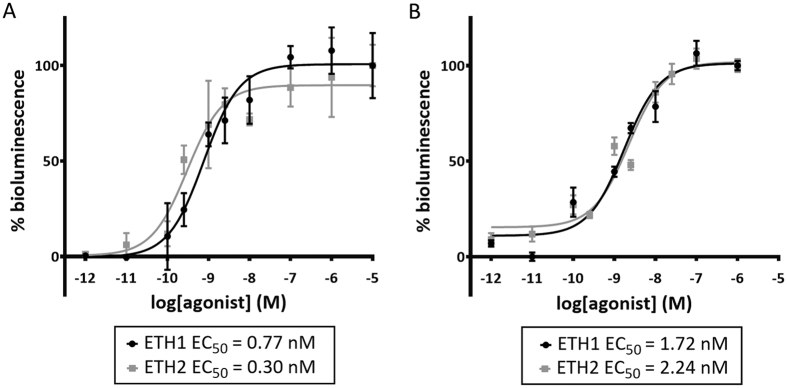Intracellular signalling in SchgrETHR -expressing CHO-PAM28 and HEK293T cells. Receptor activation is shown as relative (%) to the highest value (100%) after normalization to the maximum response. Data represent the mean (±SEM) of three independent measurements, each performed in triplicate. ( A ) Dose-response curves for bioluminescence induced by Schgr ETH1 and Schgr ETH2 in SchgrETHR -expressing CHO-PAM28 cells. Zero response level is measured in cells challenged with BSA only. ( B ) Dose-response curves for luciferase bioluminescence induced by Schgr ETH1 and Schgr ETH2 in SchgrETHR -expressing HEK293T cells. Zero response level is measured in cells challenged with DMEM/IBMX.