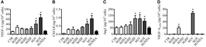 Human secreted phospholipases A 2 (sPLA 2 s) induce the release of vascular endothelial growth factors (VEGFs), Ang1, and CXCL8/IL-8 from PMNs . PMNs were incubated (37°C, 3 h) with sPLA 2 [5 µg/ml, human group IB (hGIB), hGIIA, hGIIE, hGIIF, hGV, hGX, and hGXIIA] or control medium (A–D) . At the end of incubation, the supernatants were collected and centrifuged (1,000 × g , 4°C, 5 min). VEGF-A (A) , CXCL8/IL-8 (B) , Ang1 (C) , and VEGF-A 165b (D) were determined by ELISA. The values are expressed as picograms or nanograms of mediators per 10 6 cells. The results are the mean ± SD of eight different preparations of PMNs. * p