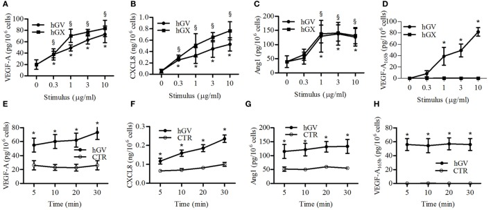 Effect of increasing concentrations of human group V (hGV) and human group X (hGX) on vascular endothelial growth factor (VEGF)-A (A), CXCL8/IL-8 (B), angiopoietin 1 (Ang1) (C), and VEGF-A 165b (D) release from PMNs . PMNs were incubated (37°C, 3 h) with hGV and hGX (0.3–10 µg/ml) or control medium. (E–H) Kinetics of hGV-induced release of VEGFs, Ang1, and CXCL8/IL-8 from PMNs. The cells were incubated (37°C, 5–30 min) with hGV (3 µg/ml). At the end of incubations, the supernatants were collected and centrifuged (1,000 × g , 4°C, 5 min). Data are the mean ± SD of different eight preparations of PMNs *(for hGV) and § (for hGX) p
