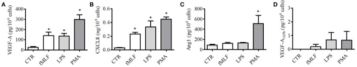 Effect of fMLF, LPS, and phorbolmyristate acetate (PMA) on vascular endothelial growth factors (VEGFs), angiopoietin 1 (Ang1), and CXCL8/IL-8 release from PMNs . PMNs were incubated (37°C, 3 h) with fMLF (50 nM), LPS (100 ng/ml), PMA (80 nM), or control medium (A–D) . At the end of incubation, the supernatants were collected and centrifuged (1,000 × g , 4°C, 5 min). VEGF-A (A) , CXCL8/IL-8 (B) , Ang1 (C) , and VEGF-A 165b (D) were determined by ELISA. The values are expressed as picograms or nanograms of mediators per 10 6 cells. The results are the mean ± SD of eight different preparations of PMNs. * p