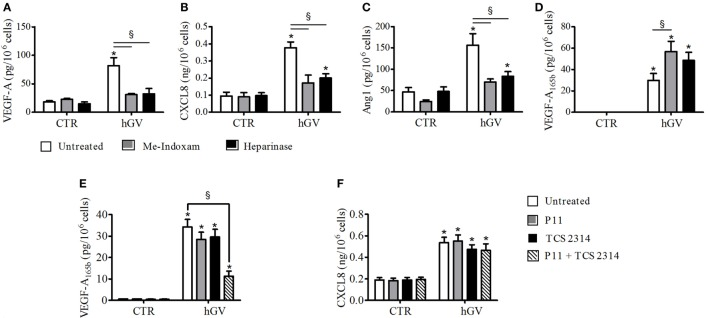 (A–D) Effect of Me-Indoxam or with Heparinase on human group V (hGV)-induced vascular endothelial growth factor (VEGF)-A, CXCL8/IL-8, Ang1, and VEGF-A 165b release from PMNs. hGV (3 µg/ml) was preincubated (37°C, 20 min) with Me-Indoxam (0.1 µM) or control medium. PMNs were then incubated (37°C, 1 h) with heparinase (0.4 U/ml) or control medium and then stimulated (37°C, 30 min) with hGV alone or with the combination of hGV with Me-Indoxam. (E,F) α V β 3 (P11) and α 4 β 1 (TCS2314) receptor antagonists inhibit GV-induced PMNs production of antiangiogenic factors. PMNs were preincubated (37°C, 30 min) with or without P11 and TCS 2314 (100 nM) and then stimulated (37°C, 30 min) with hGV (3 µg/ml). Data are the mean ± SD of eight different preparations of PMNs. * p