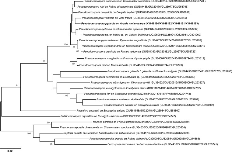 Neighbor-joining tree of Pseudocercospora pyricola based on the multigene dataset of translation elongation factor 1-alpha (EF-1α), actin (ACT), internal transcribed spacer (ITS), and large subunit ribosomal DNA (LSU). In the phylogenetic tree, the numbers (bootstrap values) are above or under the nodes obtained from 1,000 replicates. The GenBank numbers are represented in the order of EF-1α, ACT, ITS, and LSU, respectively. The isolate obtained in this study is highlighted in bold.