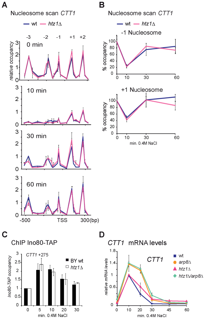 The H2A variant H2A.Z is not involved in INO80 related effects at stress genes. H2A.Z is not involved in delayed promoter <t>nucleosome</t> repopulation in arp8 Δ. ( A and B ) Nucleosome scanning assay of the CTT1 locus (−600 to +350 bp). Wild-type and htz1 Δ cells were treated with 0.4M NaCl for 10, 30 and 60 min or left untreated. NuSA are shown in (A) and quantification of NuSA of the CTT1 −1 and +1 nucleosomes in wild-type and htz1 Δ are shown in (B). Graphs in (B) are normalized to the untreated wild-type sample. ( C ) The stress induced transient recruitment of INO80 to the 5΄ end of the CTT1 locus is similar in wild-type and htz1 Δ mutant. Recruitment to the CTT1 5΄ region (+275) including the +1 nucleosome during osmotic stress (for indicated time points) was measured by ChIP of Ino80-TAP. ( D ) Expression of the CTT1 locus during osmotic stress is not influenced by absence of H2A.Z. Wild-type cells (BY4741), arp8 Δ, htz1 Δ and htz1 Δ arp8 Δ mutants were treated with 0.4M NaCl for indicated time points. CTT1 expression levels were quantified relative to VCX1 by <t>qRT-PCR.</t> Expression levels were normalized to the maximum expression levels in wild-type (10 min).