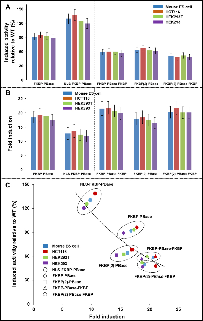 Optimization of the induced transposition activity and fold induction for FKBP-based PB transposon induction system. ( A ) Induced transposition activity of different PBase fusion proteins relative to wild-type PBase across four cell lines. Experiments were done in triplicates. The induced transposition activity of a PBase fusion protein was calculated as the normalized number of colonies from the PBase fusion in the presence of corresponding chemical inducer divided by that from 'wild type' unfused PBase. ( B ) Fold induction of different PBase fusion proteins across four cell lines. The induction fold was calculated as the normalized number of colonies from chemical inducer treated samples divided by that from untreated samples. ( C ) Comparison of the induced transposition activity with the fold induction for different PBase fusion proteins across four cell lines.